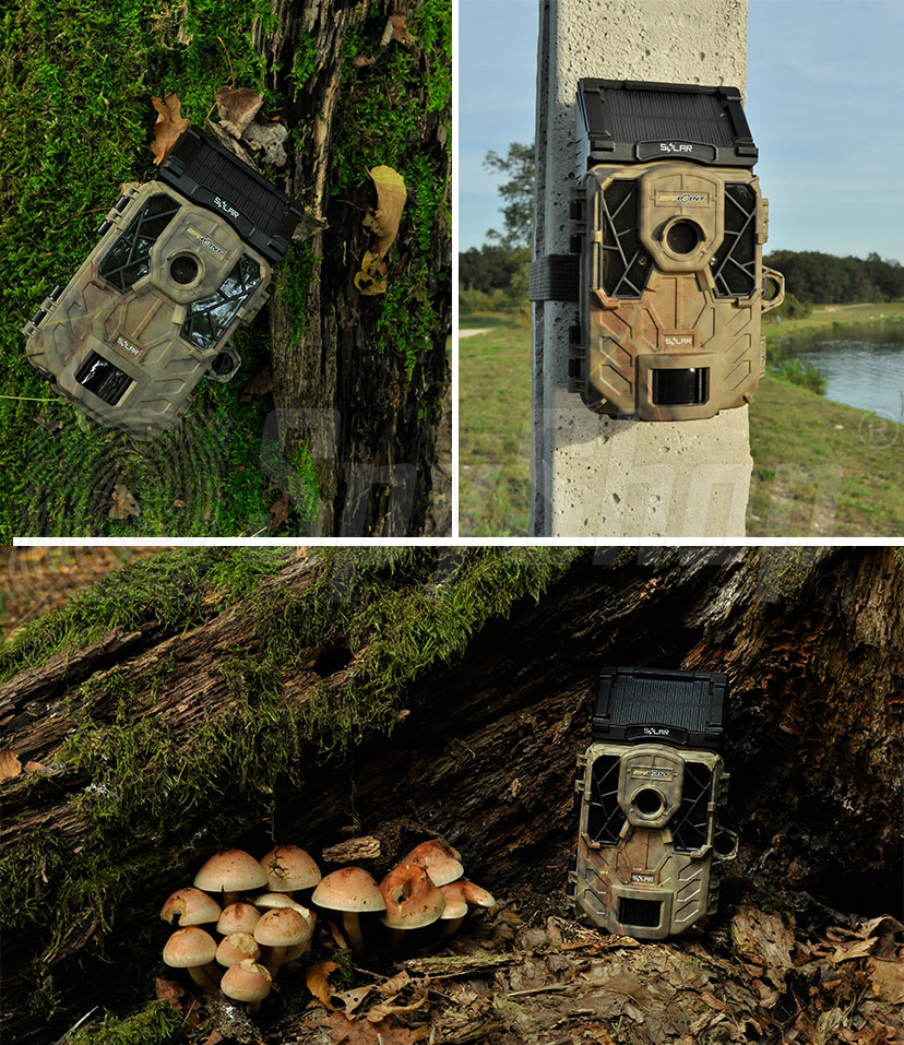 Wildlife camera trap