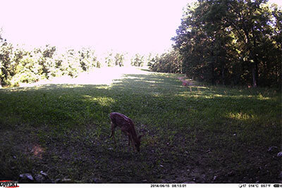 wireless trail camera Covert Outlook